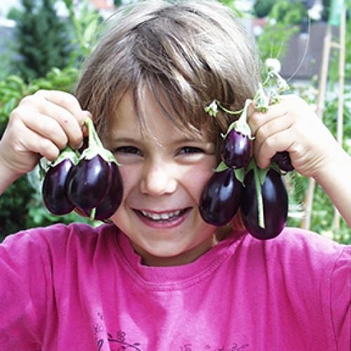 Eggplant Seeds, Ophelia F1 Hybrid Mini
