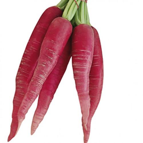 Radish Seeds, Ostergruss Rosa 2