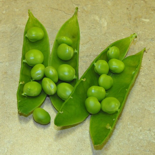 Bush Pea Seeds, Paladio