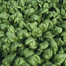 Spinach Seeds, Palco F1 Hybrid