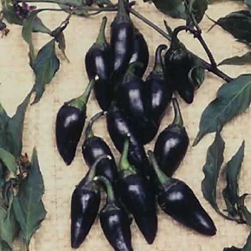 Pepper Seeds, Black Hungarian
