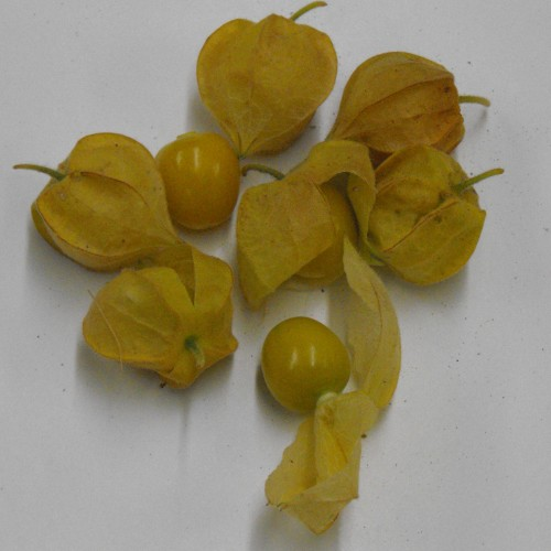 Tomatillo Seeds, Husk Tomato Pineapple