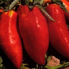 Tomato Seeds, Piramide