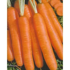 Carrot Seeds, Nantese Prima