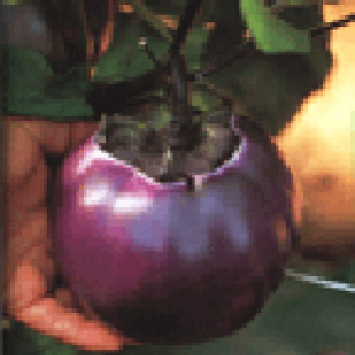 Eggplant Seeds, Prosperosa