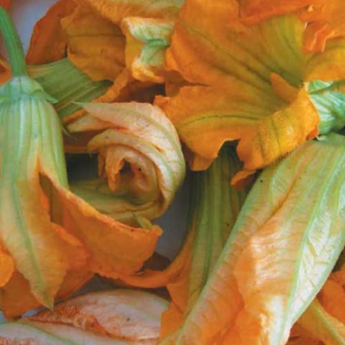 Pumpkin Seeds, for Blossoms