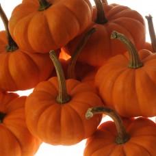 Pumpkin Seeds, Wee Be Little