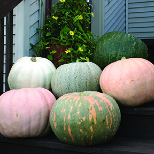 Pumpkin Seeds, World of Color (Standard)