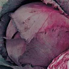 Cabbage Seeds, Red Cabeza Negra 3