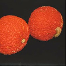 Squash Seeds, Red Warty Thing