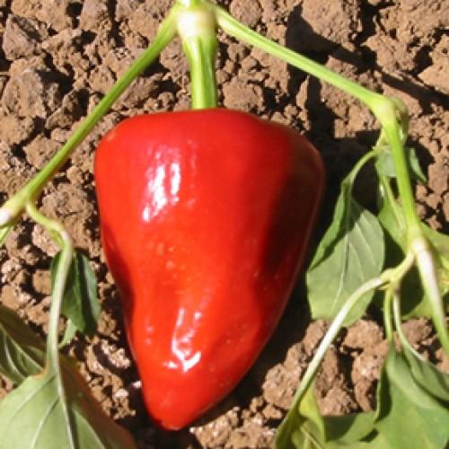 Pepper Seeds, Romanian Sweet