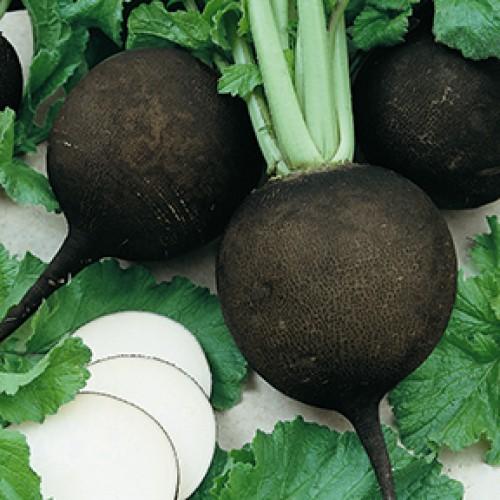 Radish Seeds, Black Spanish Round