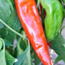 Pepper Seeds, Sandia