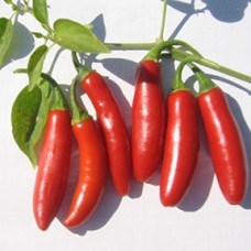 Pepper Seeds, Serrano Tampiqueno