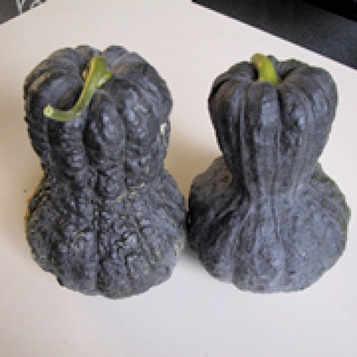 Squash Seeds, Shishigatani