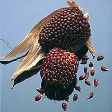 Popcorn Seeds, Strawberry
