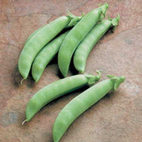 Bush Pea Seeds, Sugar Star Snap