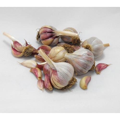 Garlic Bulbs, Italian Red Sulmona