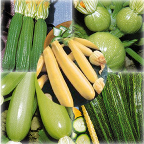 Zucchini Seeds, Summer Sampler Mix