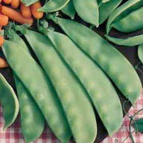 Sugar Pod Pea Seeds, Swiss Giant Carouby
