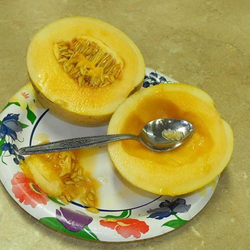 Melon Seeds, Tasty Bites F1 Hybrid