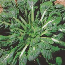 Tatsoi Seeds