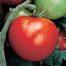Tomato Seeds, Big Rainbow