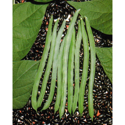 Pole Bean Seeds, Blue Lake Black Seeded