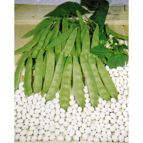 Bush Bean Seeds, Coco Bianco