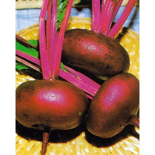 Beet Seeds, Egyptian Turnip Rooted