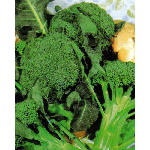 Broccoli Seeds, Calabrese Late