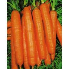 Carrot Seeds, Nantes 5 ORGANIC