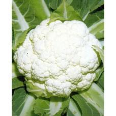 Cauliflower Seeds, Early Tuscan