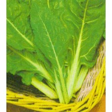 Swiss Chard Seeds, Perpetual Spinach