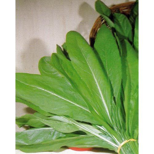 Chicory Seeds, Da Taglio Bionda Foglie