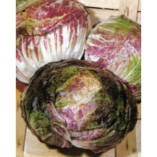 Chicory Seeds, Variegata Di Castelfranco