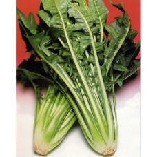 Chicory Seeds, Catalogna Frastagliate Organic