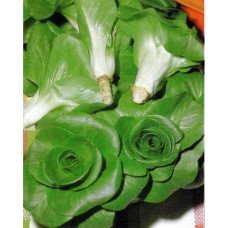 Chicory Seeds, Green Grumolo