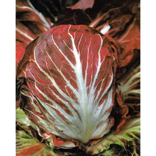 Radicchio Seeds, Palla Rossa 2