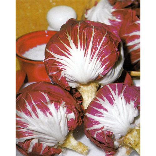 Radicchio Seeds, Palla Rossa 3