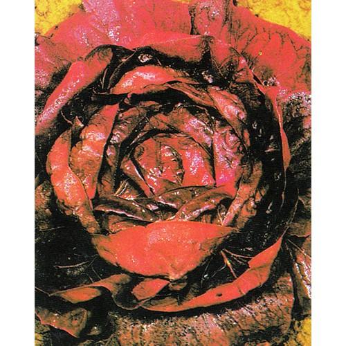 Radicchio Seeds, Rossa Di Verona