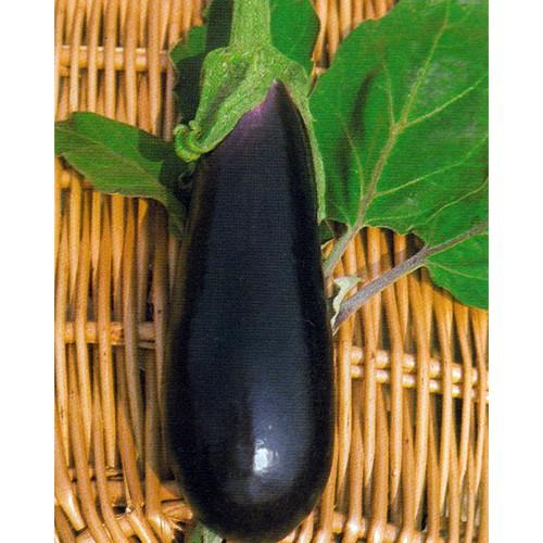 Eggplant Seeds, Long Purple 2