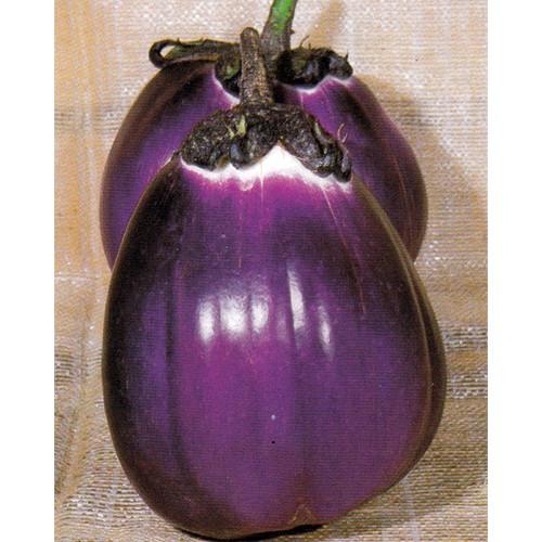 Eggplant Seeds, Violetta Di Firenze