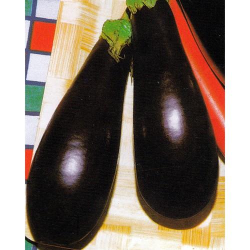 Eggplant Seeds, Salangana Professional Hybrid
