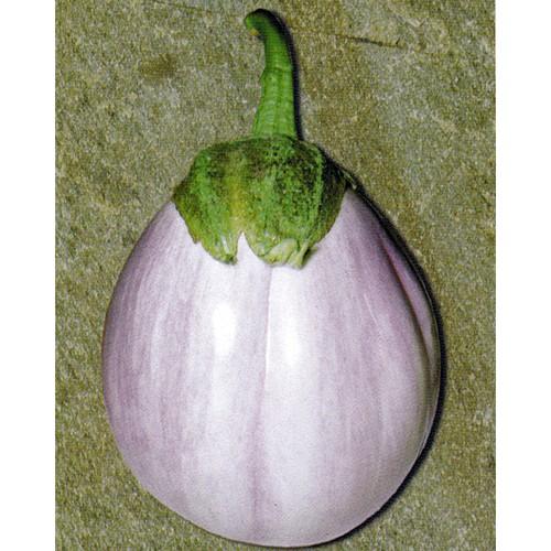 Eggplant Seeds, Bianca Sfumata Di Rosa