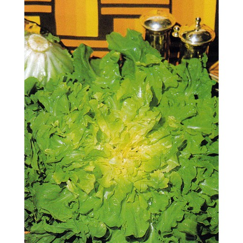 Escarole Seeds, Blond Full Heart