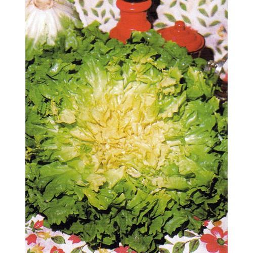 Escarole Seeds, Bubikopf 2