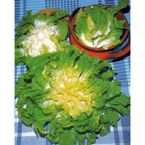 Escarole Seeds, Verde Fiorentina