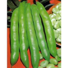 Fava Bean Seeds, Extra Precoce Violetto