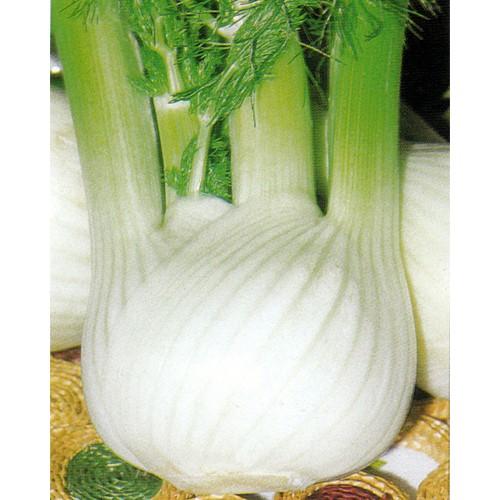 Fennel Seeds, Wadenromen S. M.